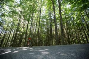 Vendita e Riparazione biciclette Da Strada